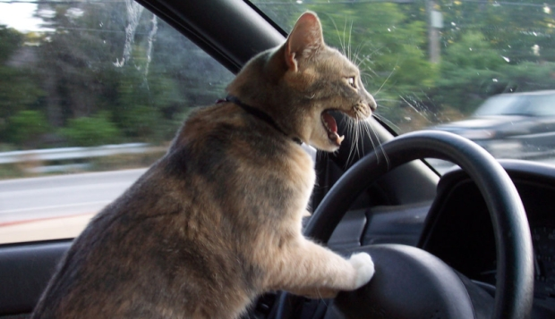 road rage 620